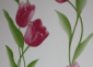 环保低碳墙纸胶浆